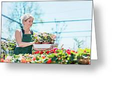 Attractive Gardener Selecting Flowers In A Gardening Center. Greeting Card