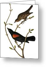 Audubon: Blackbird Greeting Card