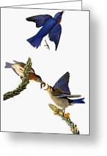 Audubon: Bluebird Greeting Card