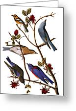 Audubon: Bluebirds Greeting Card