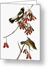 Audubon: Bobolink Greeting Card
