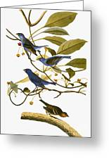 Audubon: Bunting, 1827-38 Greeting Card