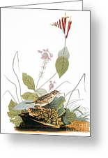 Audubon: Bunting Greeting Card
