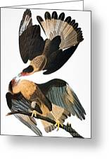 Audubon: Caracara, 1827-38 Greeting Card