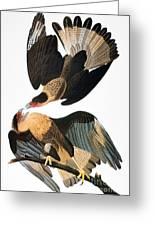 Audubon: Caracara, 1827-38 Greeting Card