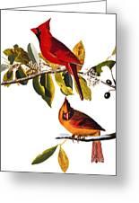 Audubon: Cardinal Greeting Card