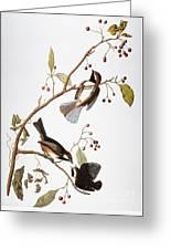 Audubon: Chickadee, (1827-1838) Greeting Card