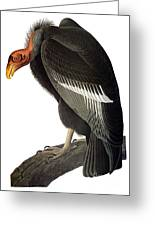 Audubon: Condor Greeting Card