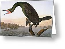 Audubon: Cormorant Greeting Card