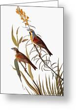 Audubon: Dickcissel Greeting Card