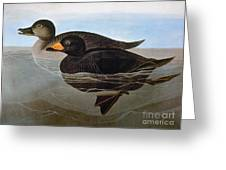 Audubon: Duck, 1827 Greeting Card