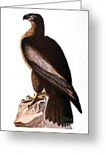 Audubon: Eagle Greeting Card