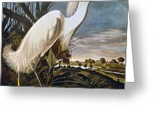 Audubon: Egret Greeting Card
