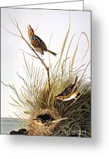 Audubon: Finch Greeting Card