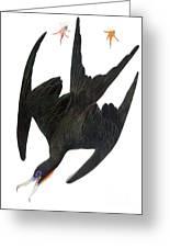 Audubon: Frigatebird Greeting Card