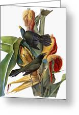 Audubon: Grackle Greeting Card