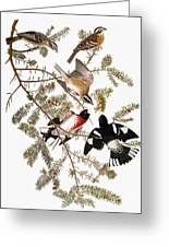 Audubon: Grosbeak Greeting Card