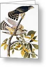 Audubon: Hawk Greeting Card
