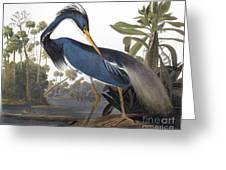Audubon Heron, 1827 Greeting Card
