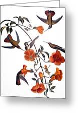 Audubon: Hummingbird Greeting Card by Granger