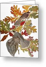 Audubon: Jay Greeting Card