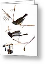 Audubon: Junco, (1827) Greeting Card