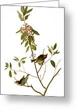 Audubon: Kinglet, 1827 Greeting Card