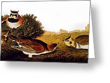 Audubon Lark Greeting Card
