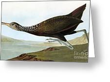 Audubon: Limpkin Greeting Card