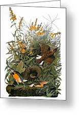 Audubon: Meadowlark Greeting Card
