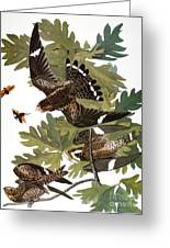 Audubon: Nighthawk Greeting Card