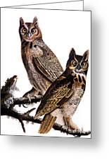 Audubon: Owl, (1827-1838) Greeting Card