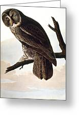 Audubon Owl Greeting Card