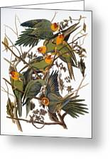 Audubon: Parakeet Greeting Card