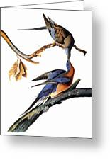 Audubon: Passenger Pigeon Greeting Card