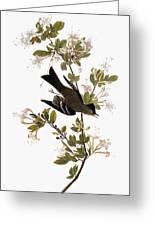 Audubon: Pewee, 1827-38 Greeting Card