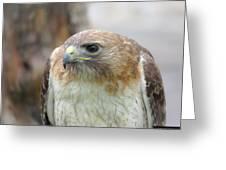 Audubon Quality Greeting Card