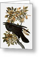 Audubon: Raven Greeting Card by Granger