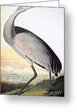 Audubon Sandhill Crane Greeting Card