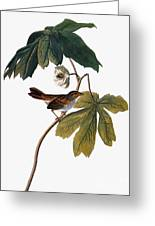 Audubon: Sparrow, 1827-38 Greeting Card