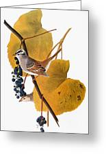 Audubon: Sparrow Greeting Card