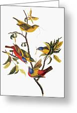 Audubon: Sparrows Greeting Card