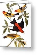Audubon: Tanager, 1827 Greeting Card
