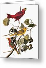 Audubon: Tanager Greeting Card