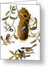 Audubon: Titmouse Greeting Card