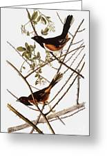 Audubon: Towhee Greeting Card