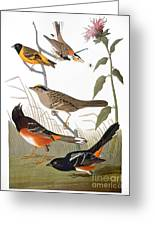 Audubon: Various Birds Greeting Card