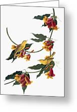 Audubon: Vireo, 1827-38 Greeting Card