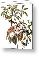 Audubon: Warbler, 1827-38 Greeting Card
