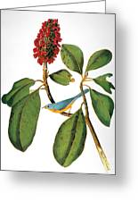 Audubon: Warbler Greeting Card